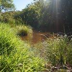 morning stroll by creek