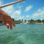 Caye Caulker. Land and Sea are One and the same.