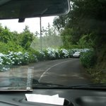 Дорога Сантаны