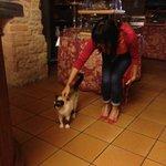 Euro - the cat