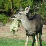 Deer everywhere