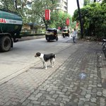 Street infront of Hotel.... The Hotel dog was very healthy and freindly :-)