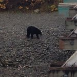 Bears are still out and about!