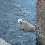 Ravenscar Seal