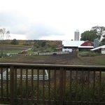 Moomers Dairy Farm