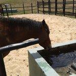 Cavalo - Um dos muitos animais do Estelar Paipa
