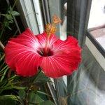 Enjoy our beatiful flower arrangement