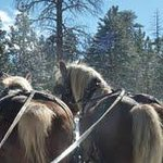We are a 4 Season location; sleigh rides, cross-country skiing..the woodstove by the guestroom..