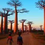 Baobab Alley, Western Madagascar