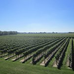 One of the many vinyards at Niagara-on-the-Lake