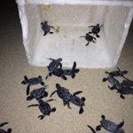 Releasing Sea Turtles