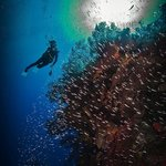 SCUBA diver Sally Herschorn explores Ghost Mountain on the North Shore of Grand Cayman