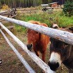 alimo and donkey