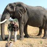 Living with Elephants, Botswana