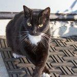 Haydon, the resident Cat
