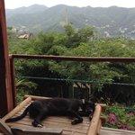 View from poolside breakfast