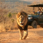 Safaris are offered twice daily through 40 000 ha of pristine wilderness, home to 50 mammals, up