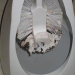 Toilet brush 2