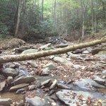 Buckberry creek @ pavillion