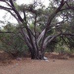 Tree near the Nature Center