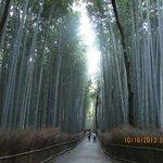Bamboo Forest near Arashiyama
