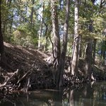 Trees along the banks of the bayou