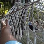 Relaxing in thehammock by the waters edge.