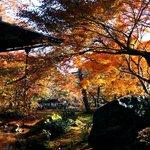 晩秋の宝厳院  光と陰