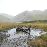 Happy out in the bog