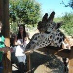 feeding giraffes!!