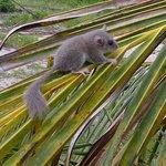 The coconut plantation has lots of wildlife