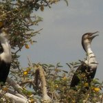 Bird Island, Lake Zway
