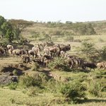Wilder Beast Migration