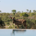 Game Drive from the Infiniti Pool