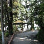 Walk from Subhash Chowk