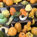Fantastic Gourds