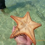 Starfish Point beach