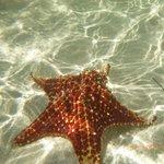 Starfish Point beach