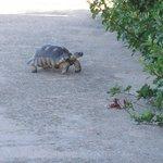 Very cute tortoise