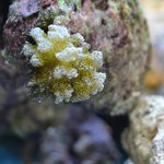 Кораллы на берегу