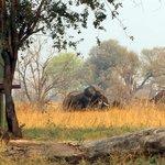 Elefanten im Camp