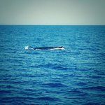 Southern Cross Whale Watch Tour