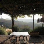terrassen dækket af vin