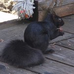and a close up of the squirrel