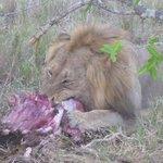 Diner time for Leo