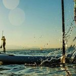 paddleboard rentals in Naples Florida - Beach Bum Surf & Supply
