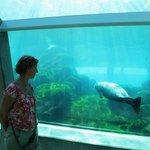 Тоннель под бассейном с тюленями