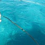 mer à Cominho