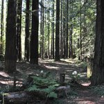 This IS the Forrest Primeval, Giant Redwoods on CA128 to Mendocino