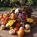 Master Pumpkin Carvers
